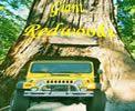 Redwood National