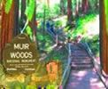 Muir Woods Private Tours