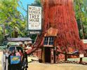 Private Tours to Muir Woods