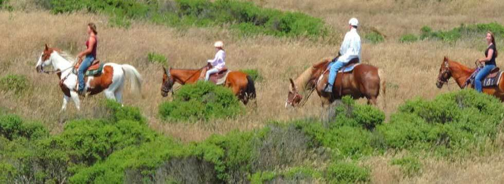 Muir Woods Park Private Tour and Horseback Riding Outdoor Adventure