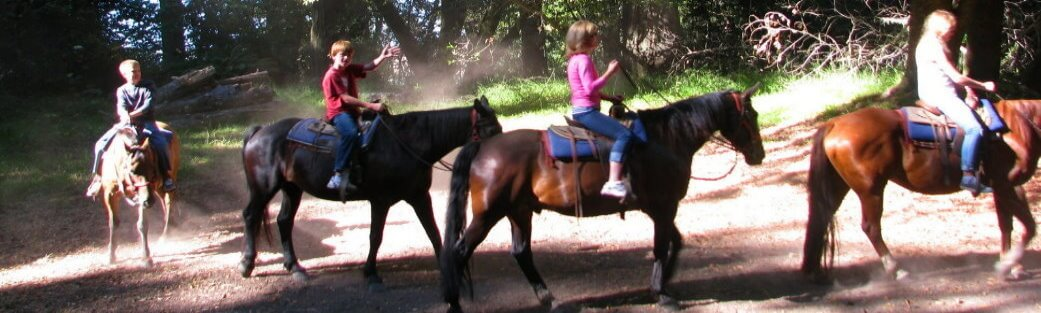 horseridingredwoodsforest